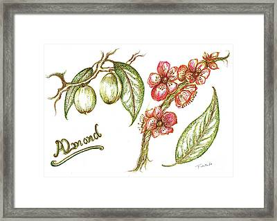 Almond With Flowers Framed Print