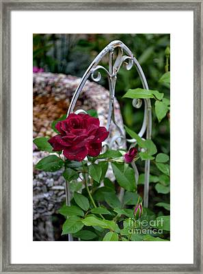 Almost A Perfect Rose Framed Print