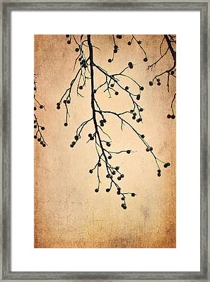 Almost Bare Branch Framed Print by Suzanne Barber