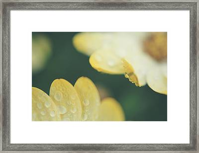 Almost Close Enough To Touch Framed Print by Laurie Search