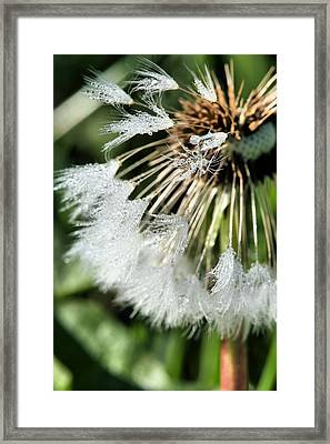 Almost Gone Framed Print by JC Findley