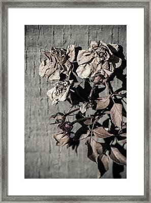Almost Gone Framed Print by Lauri Novak