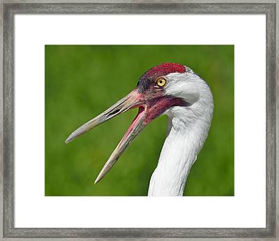 Almost Gone Framed Print by Tony Beck