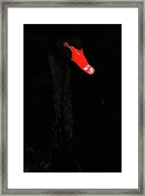 Almost Hidden  Framed Print by Karol Livote
