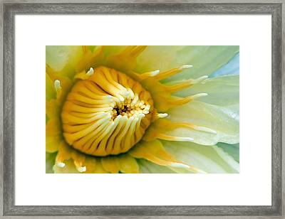 Almost Framed Print by Karen Walzer