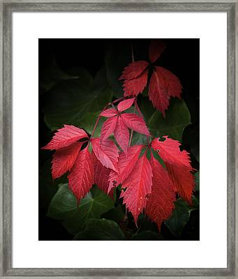 Almost September Framed Print