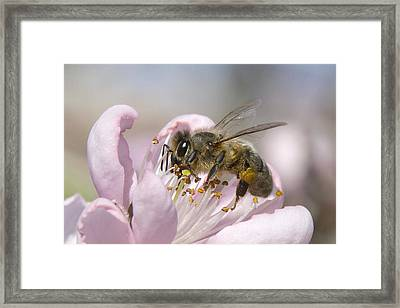 Almost Spring 01 Framed Print by Kevin Chippindall