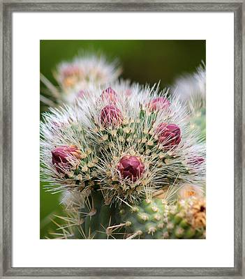Framed Print featuring the photograph Almost by Tammy Espino