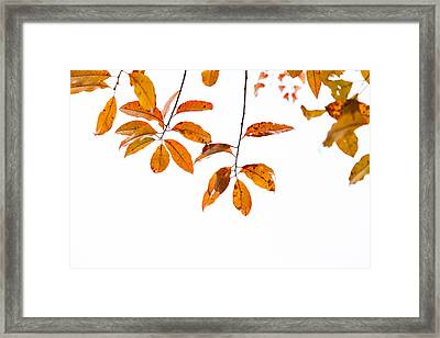 Almost Time Framed Print by Karol Livote