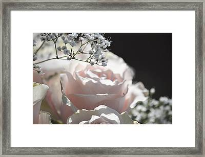 Almost White Roses Framed Print
