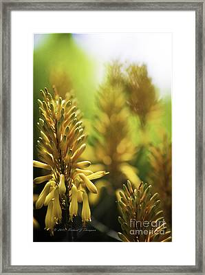 Aloe 'kujo' Plant Framed Print by Richard J Thompson