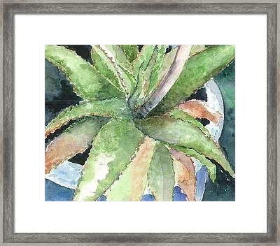 Aloe Framed Print