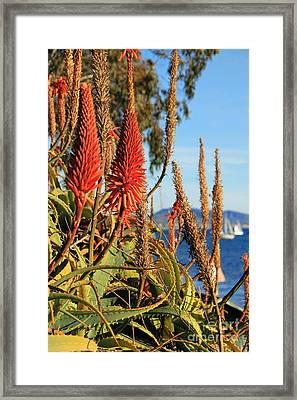 Aloe Vera Bloom Framed Print by Mariola Bitner