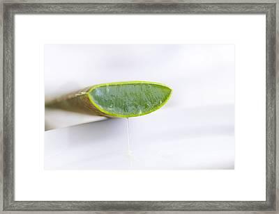 Aloe Vera Framed Print by Silke Magino