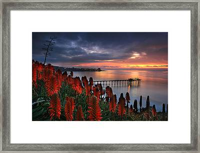 Aloes Last Light Framed Print