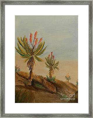 Aloes Framed Print