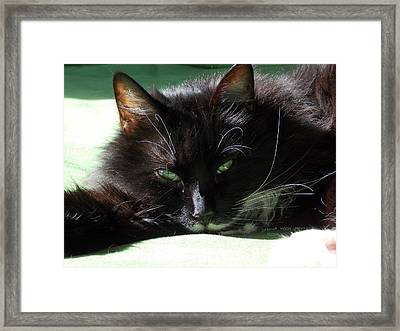 Framed Print featuring the photograph Aloha by Deborah Moen