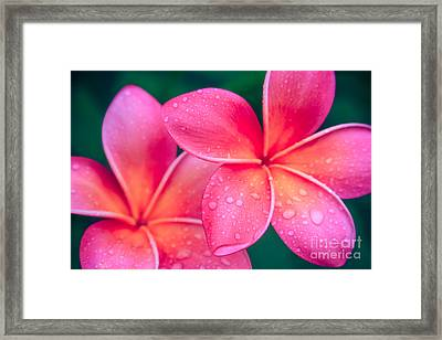Aloha Hawaii Kalama O Nei Pink Tropical Plumeria Framed Print by Sharon Mau