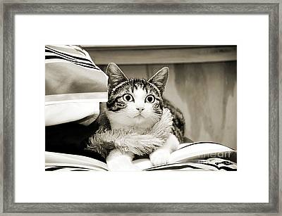 Aloha Kitty Framed Print