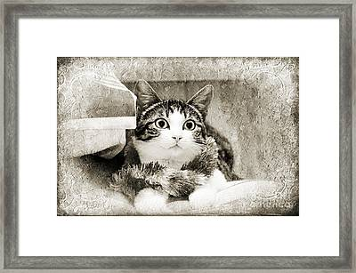 Aloha Kitty Painterly Framed Print by Andee Design