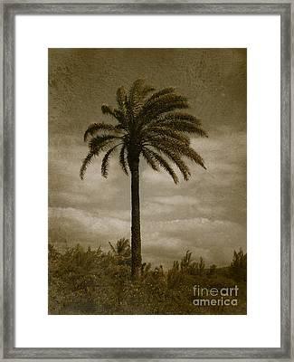 Aloha Palm - No.2047 Framed Print