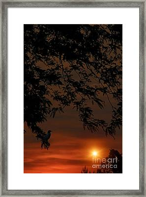Alone At The End Of The Day Framed Print