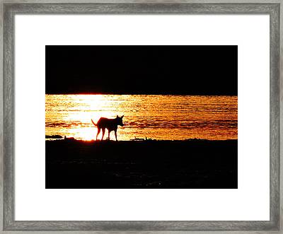 Alone Framed Print by Ayan Mukherjee