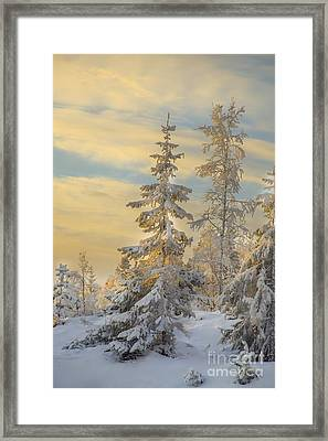 Alone But Strong Framed Print