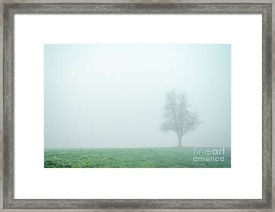 Alone In The Fog - Green Framed Print by Hannes Cmarits