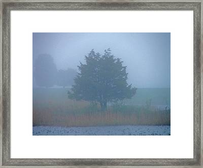 Alone In The Fog Framed Print by Nancy Landry