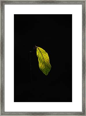 Alone In The Forest Framed Print by James Hammen