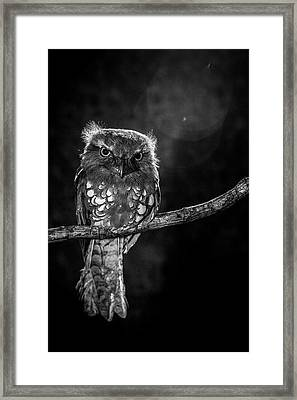 Alone In The Night Framed Print