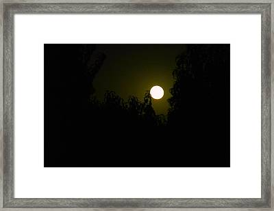 Framed Print featuring the photograph Alone In The Night by Tamara Bettencourt