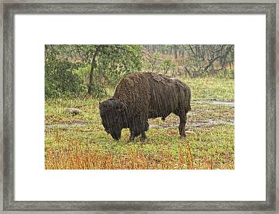Alone In The Rain Framed Print