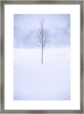 Alone In The Snow Framed Print by Andrew Soundarajan