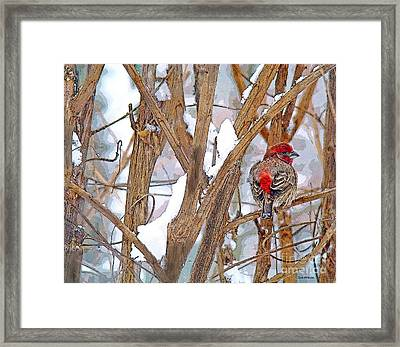 Alone In The Snow Storm Framed Print