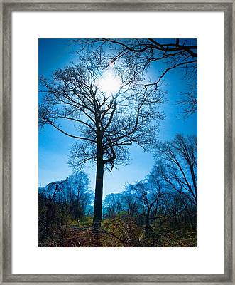 Framed Print featuring the photograph Alone In The Woods by Robert Culver