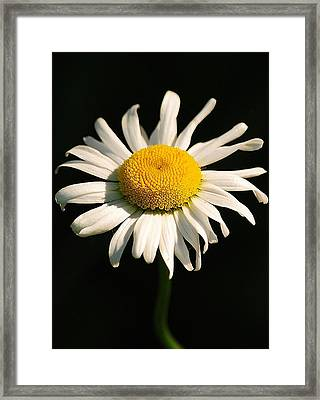 Framed Print featuring the photograph Alone by Paul Noble