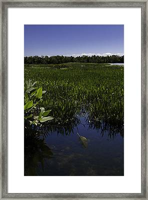 Alone Framed Print by Paul Plaine