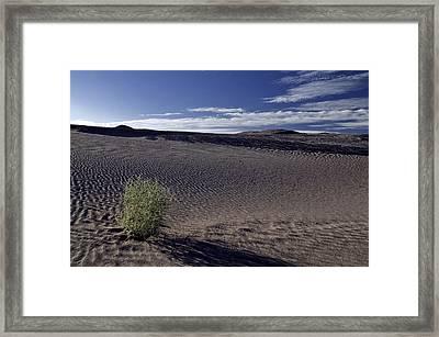 Alone Framed Print by SEA Art