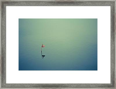 Alone Framed Print by Shane Holsclaw
