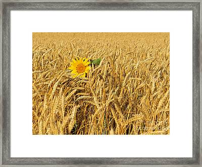 Alone Sunflower Framed Print by Boon Mee