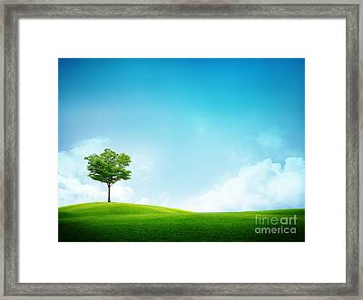 Alone Tree Framed Print by Boon Mee