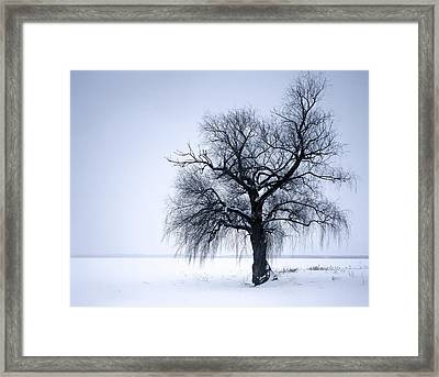 Alone Tree Framed Print