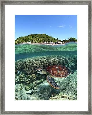 Along Shore Framed Print