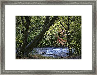Along Swift Waters Framed Print by Priscilla Burgers