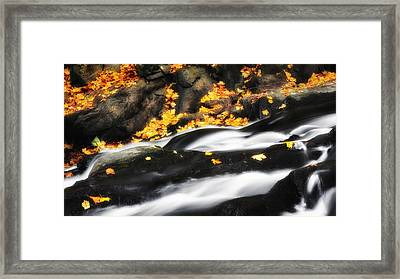 Along The Autumn Stream Framed Print by Bill Wakeley