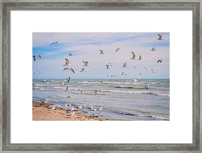 Along The Beach Framed Print