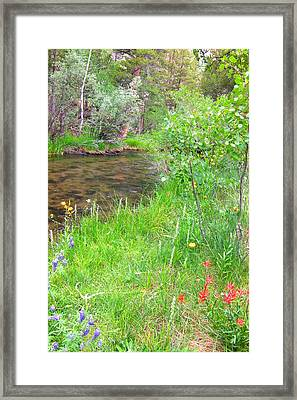 Framed Print featuring the photograph Along The Creek by Marilyn Diaz