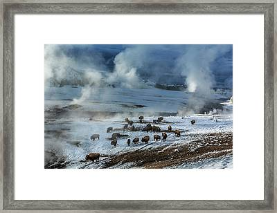 Along The Firehole River In The Upper Framed Print by Michael Nichols